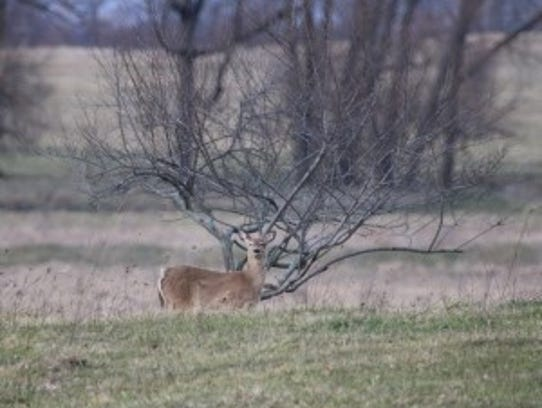 In 2016, 1,119 deer crashes were reported in Sanilac County, causing 16 injuries, according to the Michigan State Police.