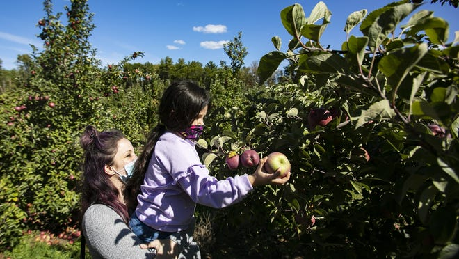 Heather Sheehan of Plympton holds her daughter Violet Sheehan, 6, up to reach a large apple in the orchards at C.N. Smith Farm in East Bridgewater on Sunday, Oct. 4, 2020.