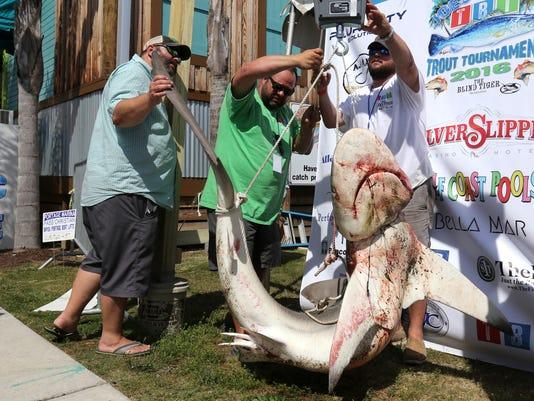 635989873054561350-Illegal-Shark-Gate.jpg