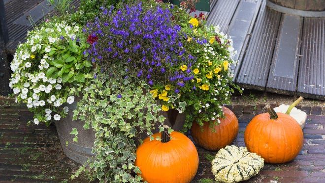 Keep up your curb appeal if you are listing your house during the fall. Be sure your lawn is well-manicured, and consider planting seasonal flowers and plants to capture attention.