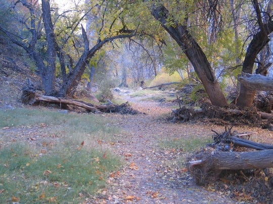 Fall leaves litter the Horse Camp area within the Aravaipa