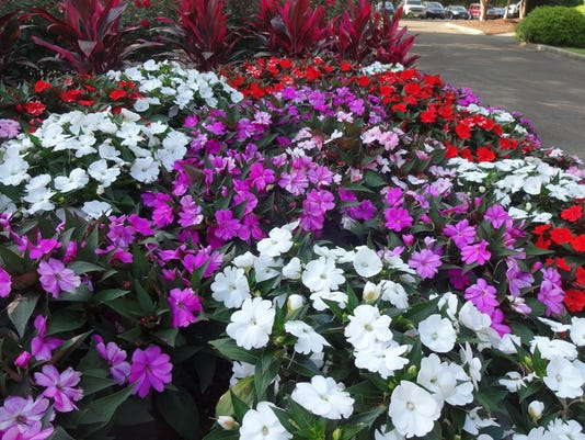 636288055995544791-SunPatiens-come-in-a-variety-of-colorsJPG.JPG