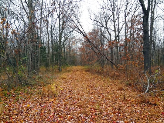 Woodlands and an old farm driveway on the 36.5-acre