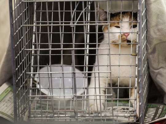 A cat recovers in the post-op area after it was spayed or neutered during a trap-neuter-return clinic at Steelton Community Cats on Wednesday, July 27, 2017.