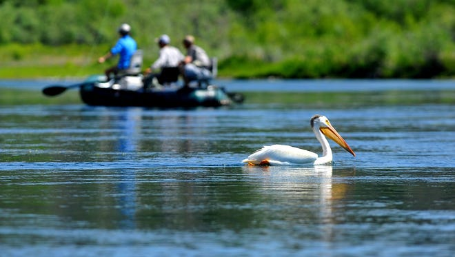 Anglers fish the Missouri River below Craig.