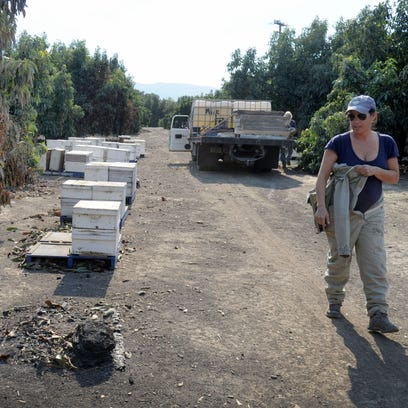 Nicole Ulibarri looks at hives that burned to the ground