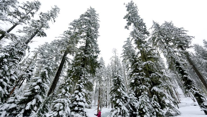 Abigayle Cook, 8, of Lebanon, plays in the snow at the Potato Hill Sno-Park at Santiam Pass in Oregon on Sunday, Jan. 24, 2016. The snow depth is 48 inches in the pass for Sunday.