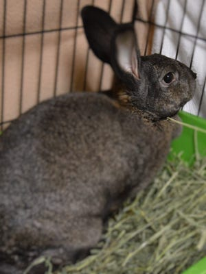 Marge, 1, has a lot of personality and is a big girl. She is spayed.