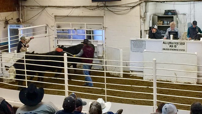 Founder/owner Ellington Peek, 87, left, handles the gate at the weekly cattle auction.
