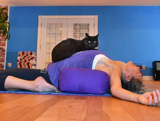 Meowga cat yoga