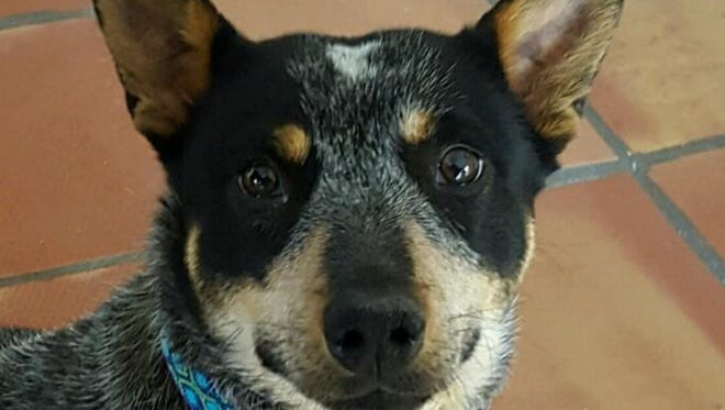 Pet of the Week: Whiskey