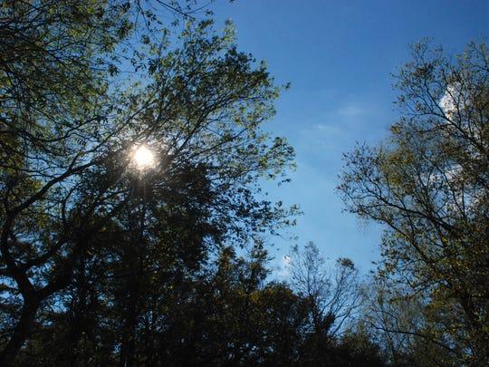 Trees and sky at Lake Martin.