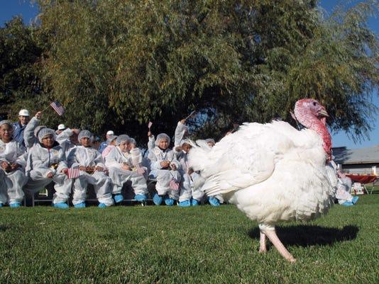 Presidential Pardon Thanksgiving Turkey