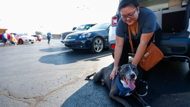 Theresa Moon pets her five-year-old pit bull Titan as she waits for her number to be called during the Pawsitive Outreach Partnership's Low Cost Vaccination and Pitbull Registration Clinic at Petsway on W. Kearney Street on Saturday, Oct. 14, 2017.