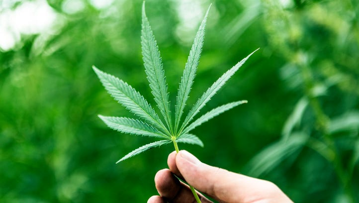 Some marijuana convictions could disappear if voters approve legal pot