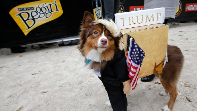 Ruby, an Australian Shepherd-mix struts her alter ego as Donald Trump at the Tompkins Square Halloween Dog Parade on Saturday in New York. Up the ante this Halloween by dressing up your four-legged friend to match you.