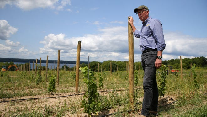 Bruce Murray looks over the new plantings of Riesling planted on 14 acres below Boundary Breaks, his winery on Seneca Lake.