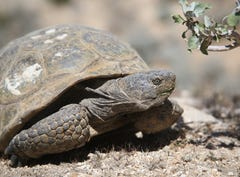 Animals struggle for survival amid changing climate