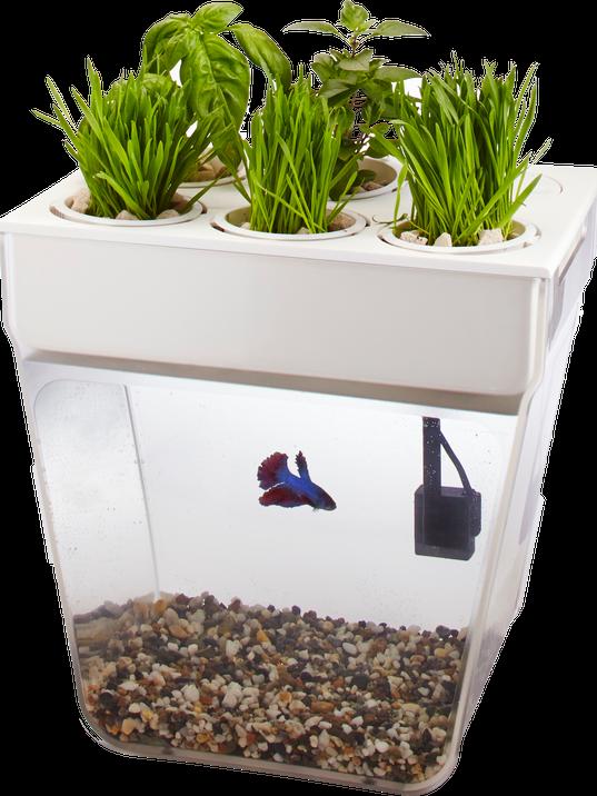 plants28-fish tank