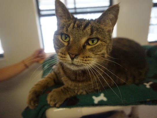 A cat, one of over 200 available for adoption at the