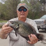 Hugh Krutz said the crappie action has been hot this week with big males slamming jigs.