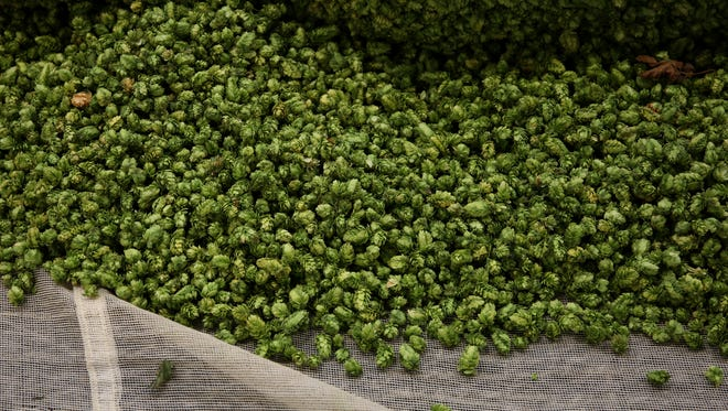 Hops are dried at Goschie Farms outside Silverton, Ore., on Thursday, Sept. 14, 2017.