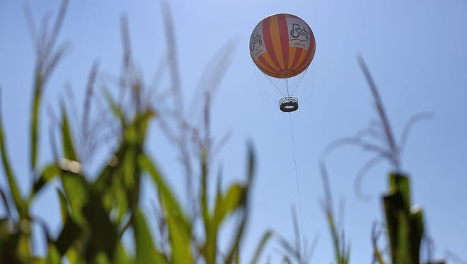 Corn stalks reach for the sky in the new Conner Prairie Corn Maze, Sunday, Sept. 24, 2017, as the Conner Prairie hot air balloon flies overhead.  The maze, a new attraction, takes over seven acres of a corn field with trails cut through, offering two routes, an easier and quicker one, and a more challenging one that takes longer.
