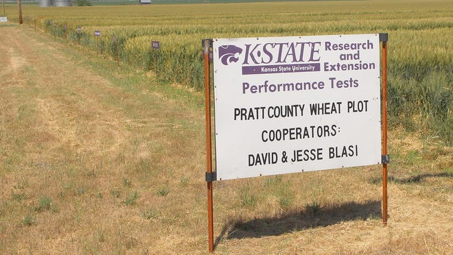 A sign marks the site of the Pratt County Extension wheat plot that was featured in dual virtual wheat plot tour with Pratt and Stafford county wheat plots.