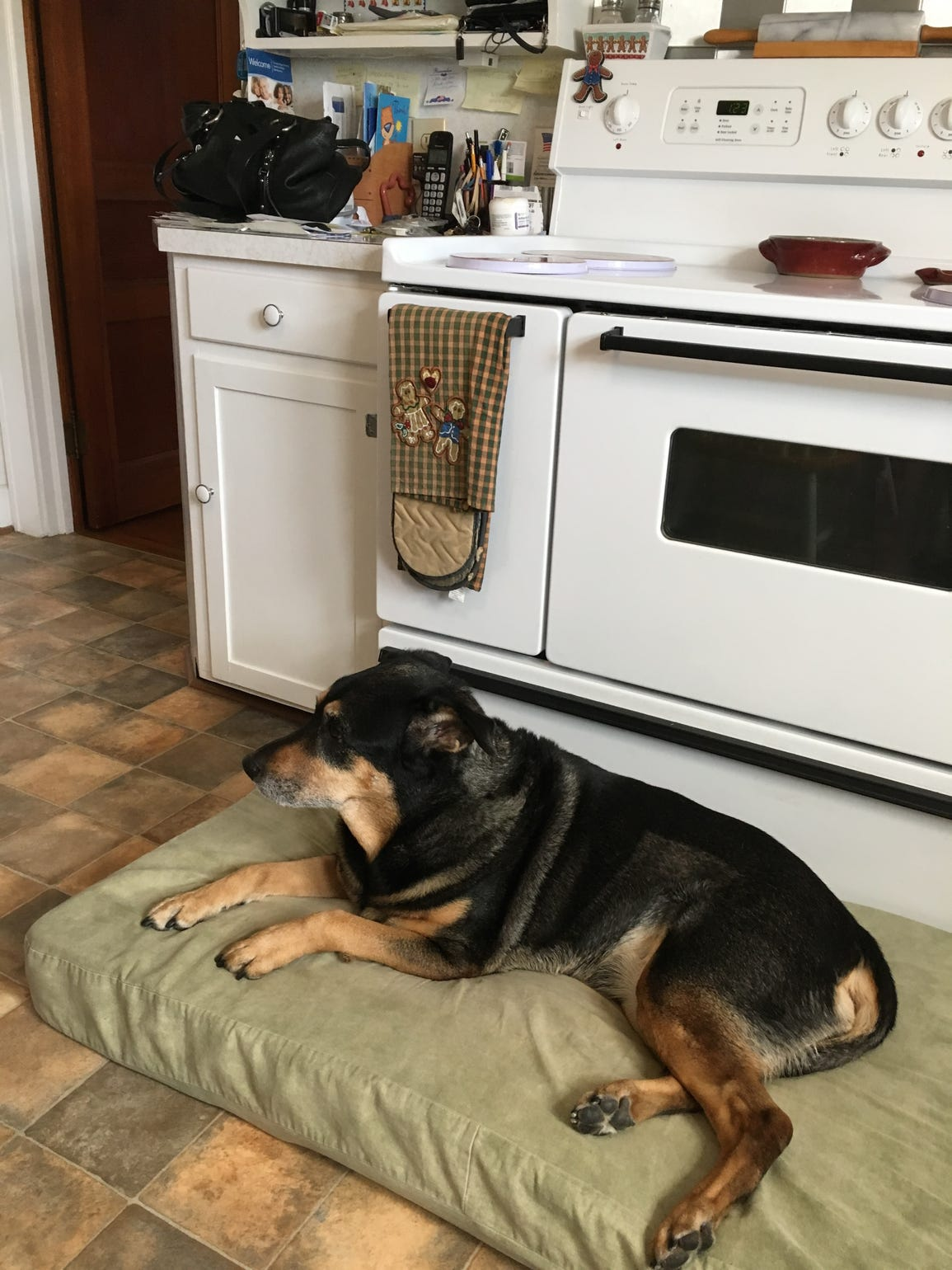 Howard Melnikoff's dog in the family's kitchen, closely