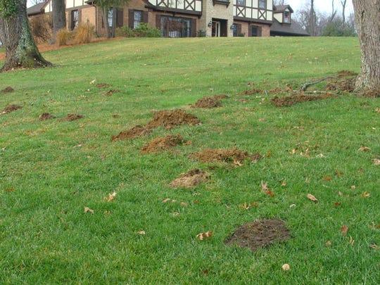 Molehills in Cincinnati