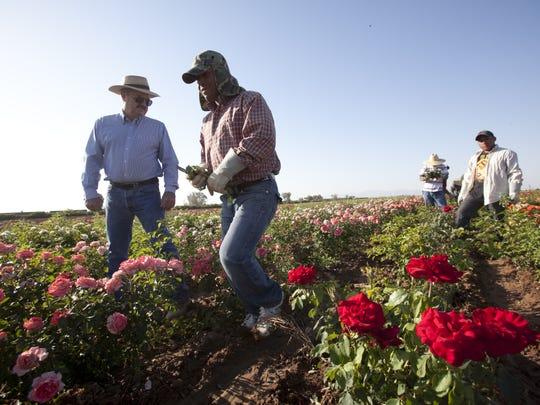 Leyton Woolf and workers at his rose farm in 2011.