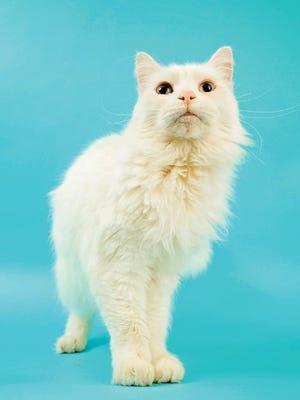 Diamond the cat