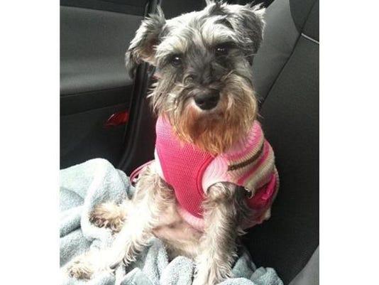 Lost dog Lola