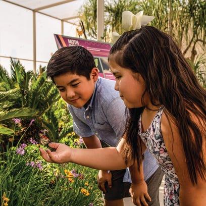 Walk among butterflies at the Desert Botanical Garden Spring Butterfly Exhibit in Phoenix