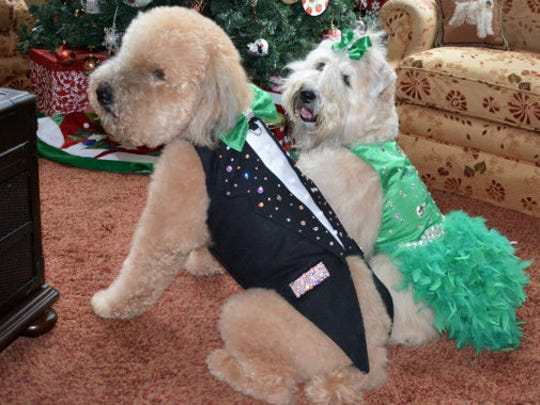 Dog Tuxedo, Swarovski Crystal Bling $200 and Dog Harness