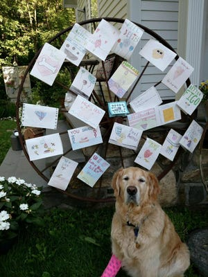 Students at St. Augustine's School in Kendall Park, NJ., sent cards to Figo at Middlebranch Veterinary in Southeast. The dog is on the mend, spending overnights with staff members until his handler is well enough to take him home. That process could take several weeks.