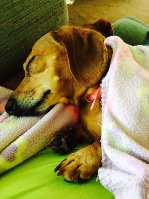 """Contributor Deb McMahon adopted Minnie as part of a """"bonded buddies"""" set from the Animal Rescue League"""