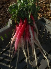 Desert gardeners can grow items such as these radishes,