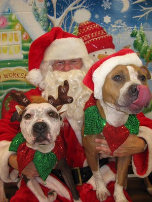 The pit bulls Freckles and Mimi from the Yonkers Animal Shelter in 2015.