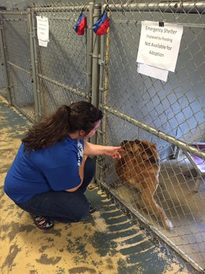 Ginny Sims, Southern Pines shelter director, talks to the pet of a flood victim.