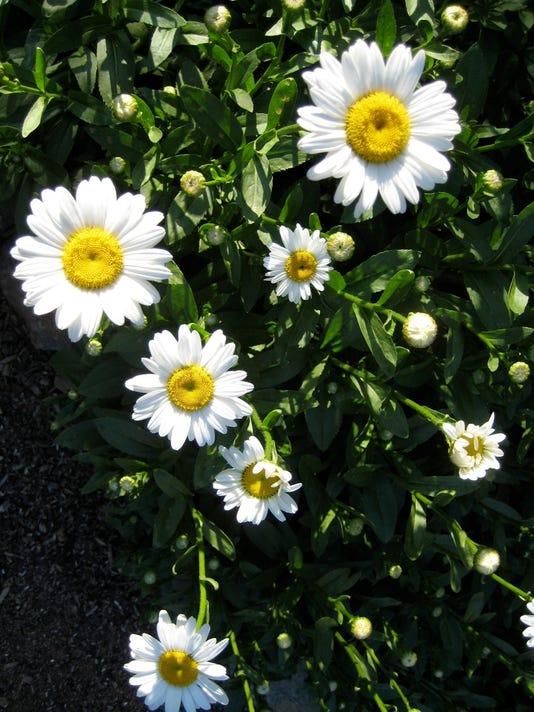 636034895677532643-Fair-Flowers-3.jpeg