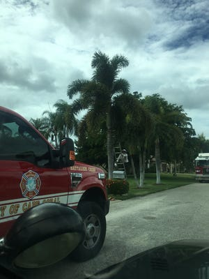 A Cape Coral firemen, who is also a beekeeper, removed a bee hive from a Southwest Cape neighborhood. The bees attacked and killed a dog, and stung its owner multiple times.