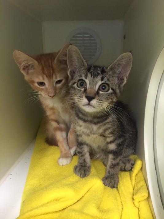 636138746633419916-kittens.jpg