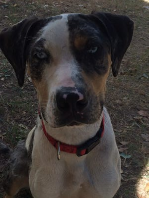 Rugar is eager to be in a good, loving home to become your family and loved.