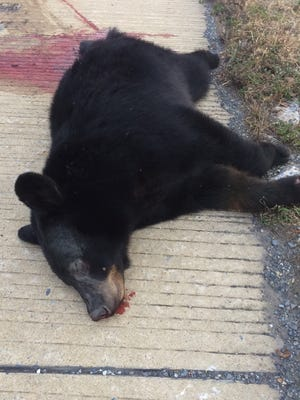A 150-pound male black bear was killed on Interstate 81 Tuesday morning, state police at Lickdale said. The bear was found dead at mile marker 88 between the Annville and Jonestown exits, according to state police. A passerby notified state police about the dead bear at around 6 a.m. Tuesday, state police said.
