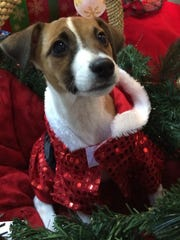 Forest would love to celebrate Christmas in his new home.