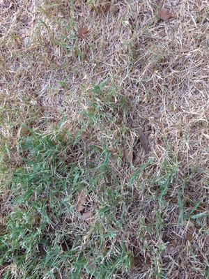 Summer heat takes a toll on lawns.