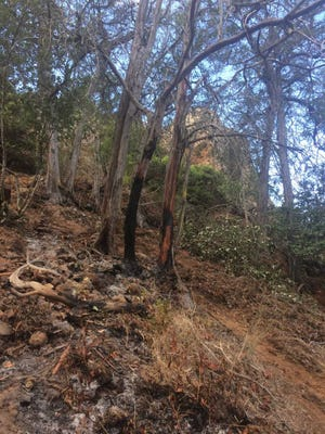 Scorched trees in the area on Santa Cruz island where a blaze was extinguished earlier this week.