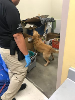A drug-detector dog sniffs through items at Astumbo Middle School Tuesday morning, after a tip given to Guam Crime Stoppers indicated possible drug activity at the Dededo campus. No contraband was found.