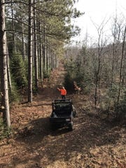 Tom Romoser of West Bend stands along a stand of pines while hunting in Marinette County on opening weekend.